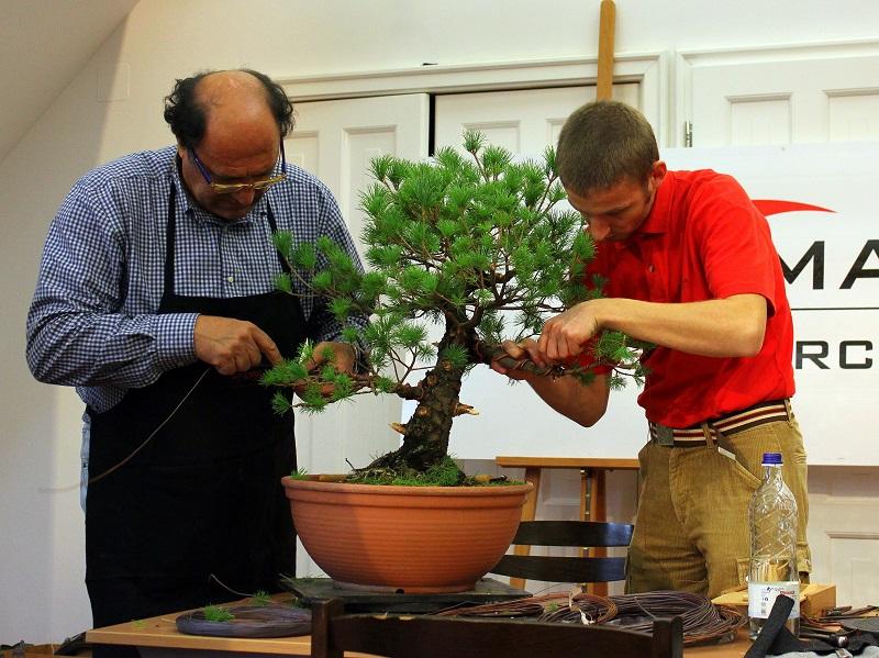 adriano bonini bonsai and suiseki mustra hungary (2)