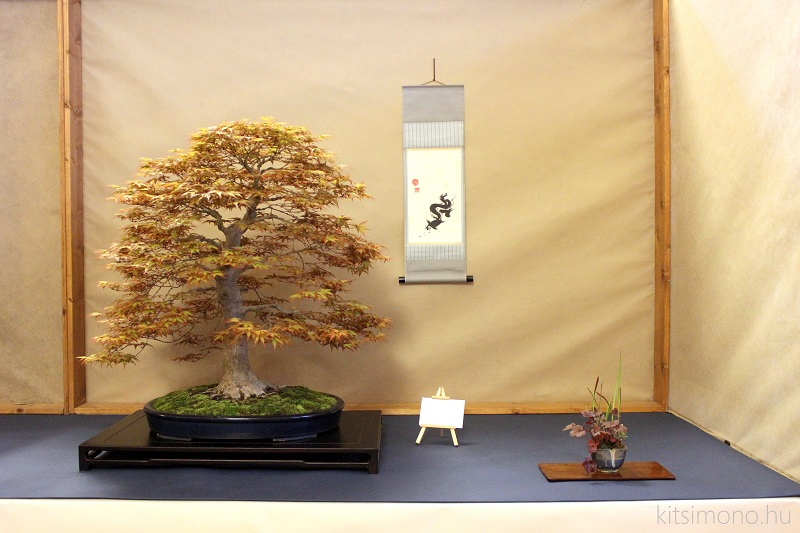 arco bonsai kitsimono 13