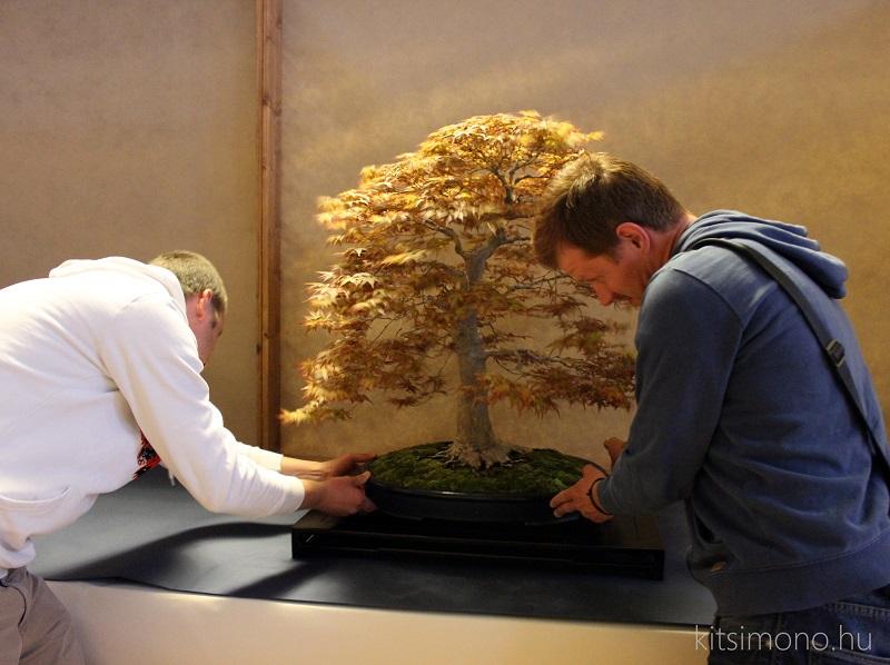 arco bonsai kitsimono 2