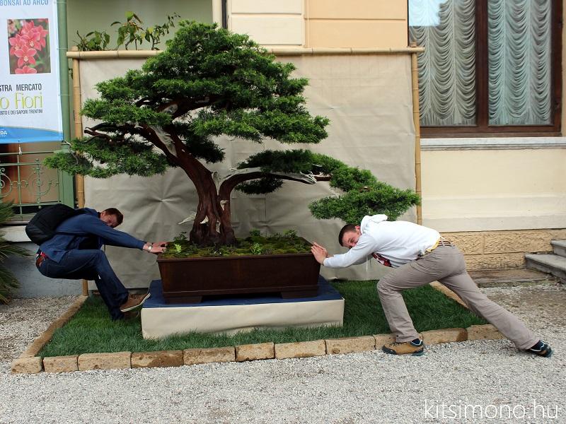 arco bonsai kitsimono italian bonsai club meeting (14)