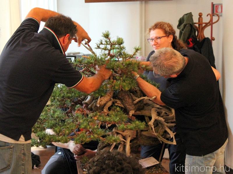 arco bonsai kitsimono italian bonsai club meeting (27)