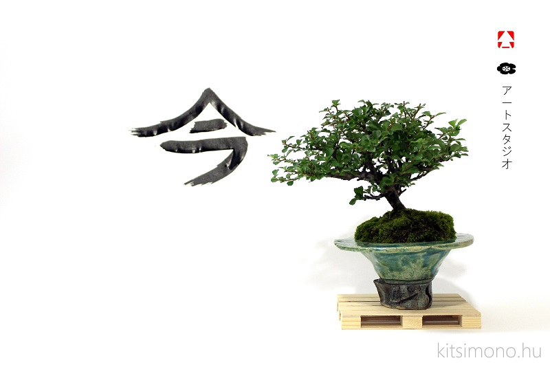 bonsai kazari idea for pine and chaenomeles shohin (6)