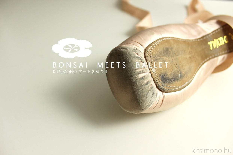 bonsai meets ballet in the kitsimono studio hungary (1)