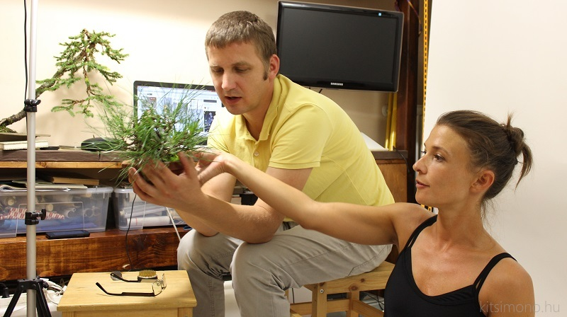 bonsai meets ballet in the kitsimono studio hungary (5)