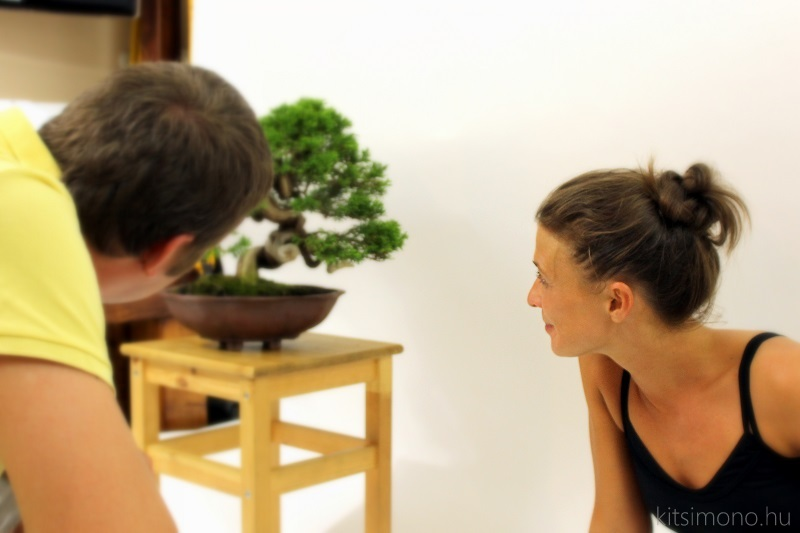 bonsai meets ballet in the kitsimono studio hungary (7)