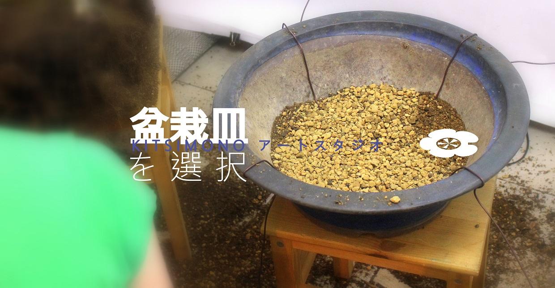 bonsai repotting shakan han kengai bonsai crataegus kitsimono (5)