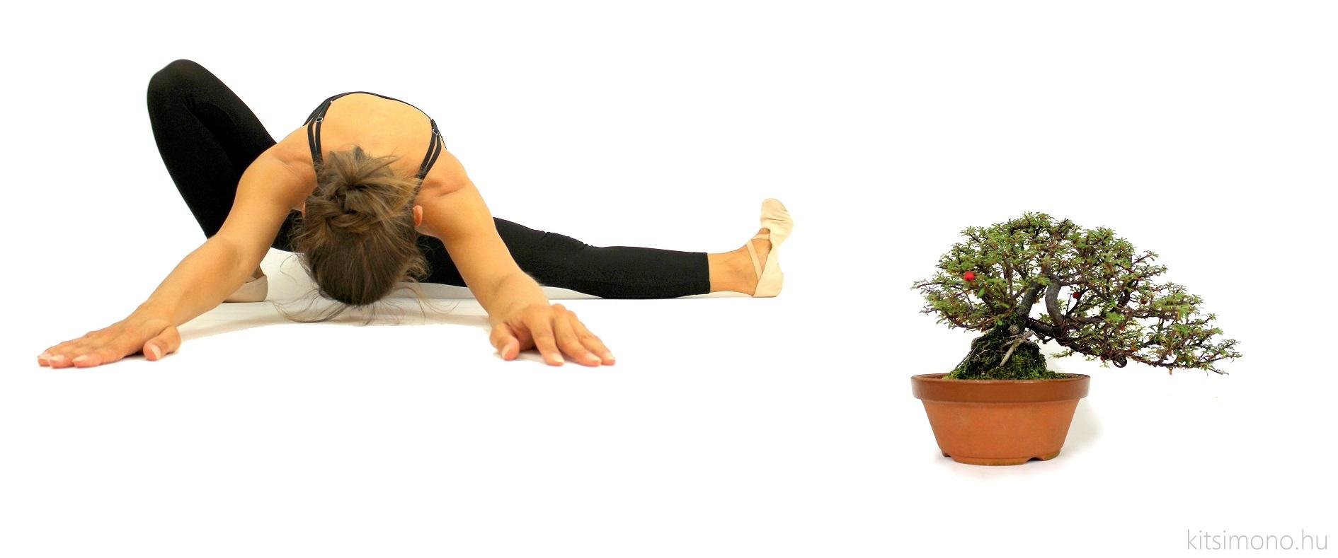 cotoneaster integrifolius shohin bonsai ballet for kazari (1)