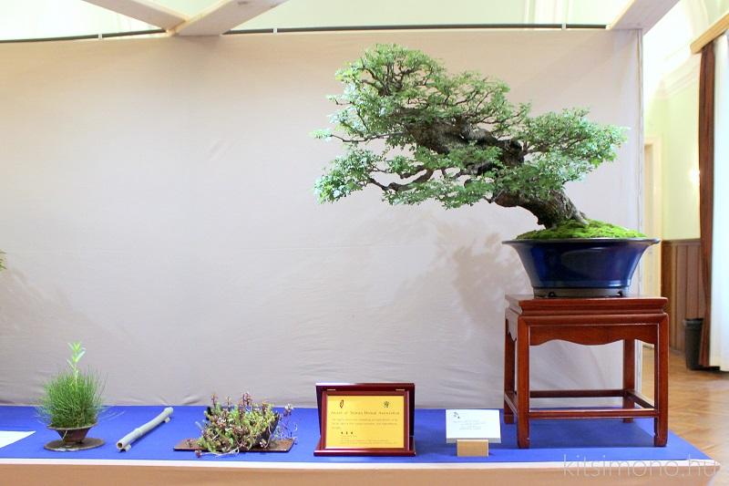 crataegus bonsai kitsimono (2)