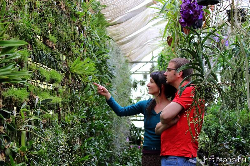 eba esa hungary orchids kusamono kitsimono (9)