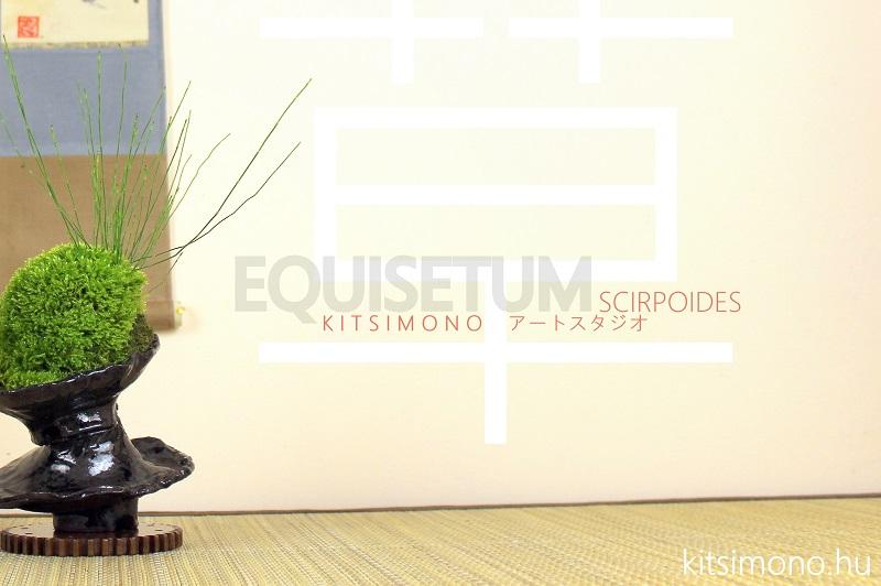 equisetum tokusa kusamono es shitakusa kokedama style design (1)