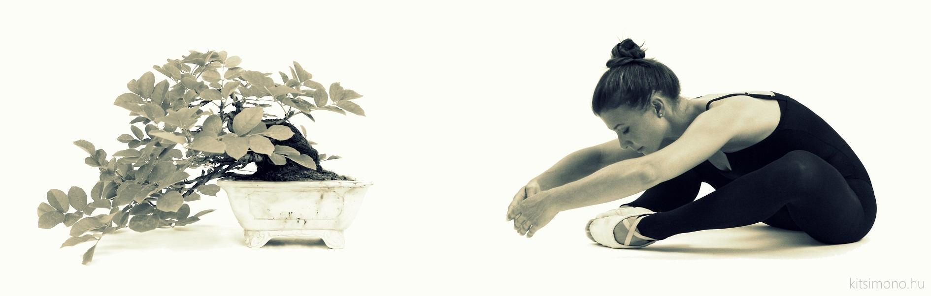 fraxinus ornus kőris shohin han kengai bonsai style kitsimono (14)