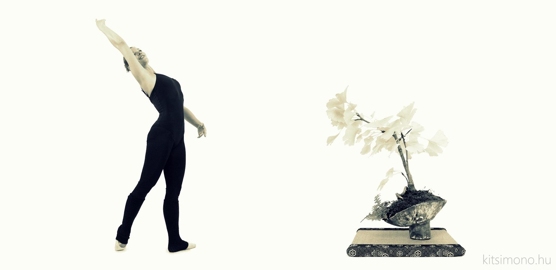 ginkgo biloba literati bunjin bonsai ballet kitsimono art studio (2)
