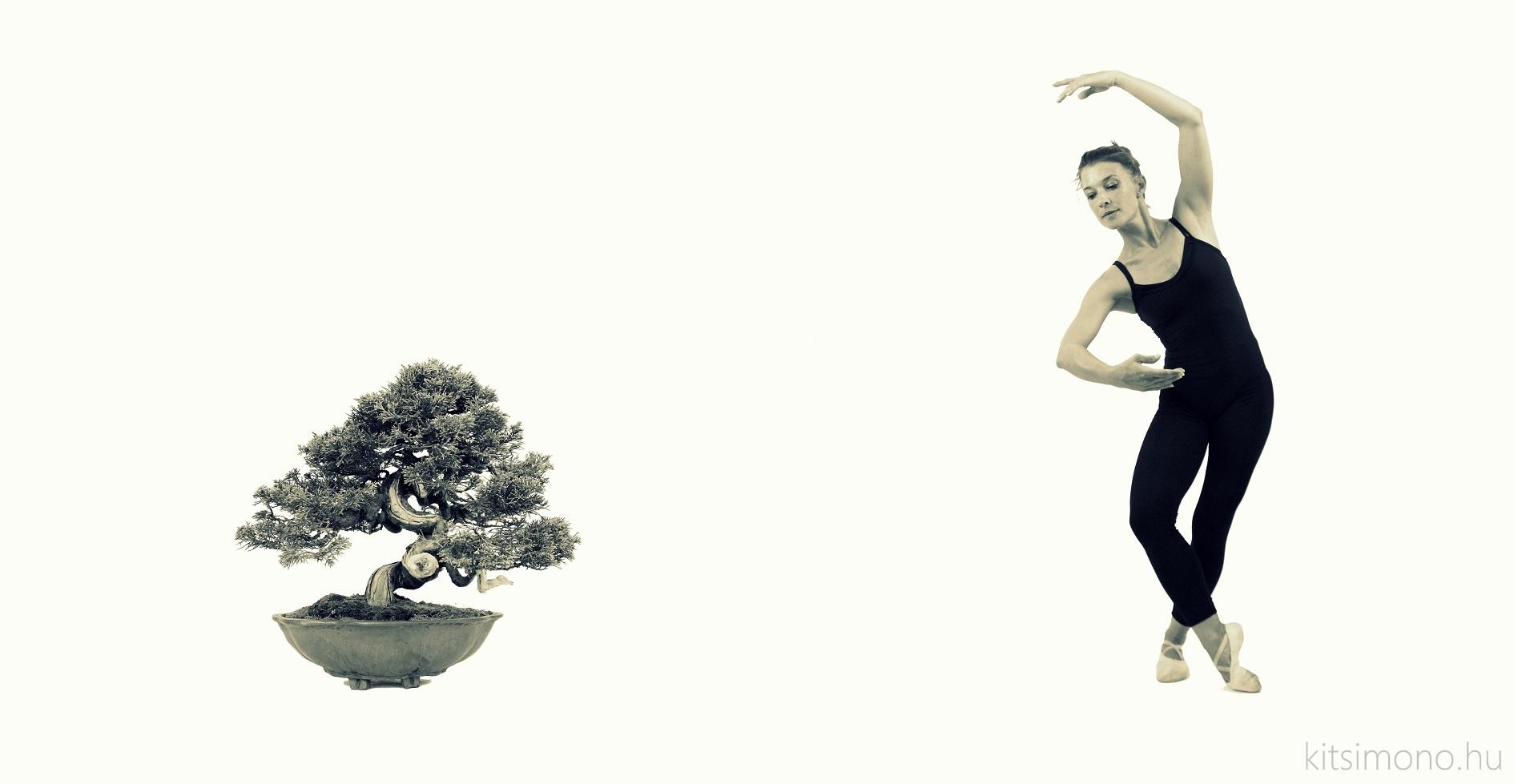 juniperus chinensis itoigawa ballet style movement kitsimono meets balet dance (2)
