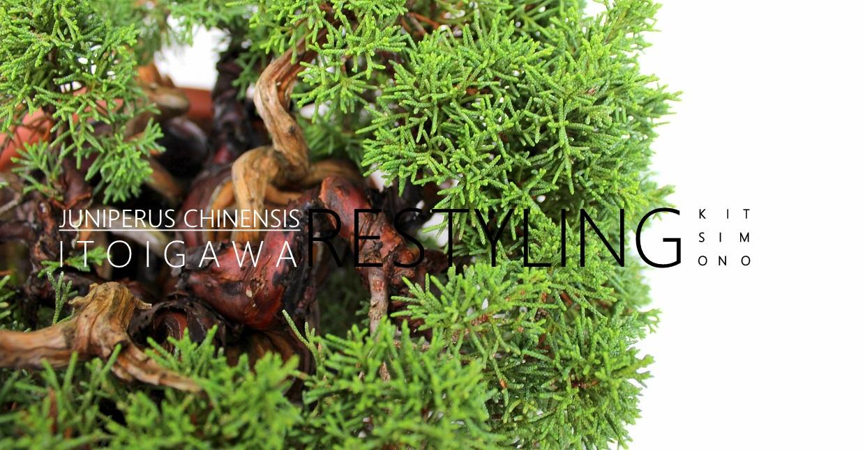 Itoigawa Japan  City pictures : juniperus chinensis itoigawa japanese bonsais 2