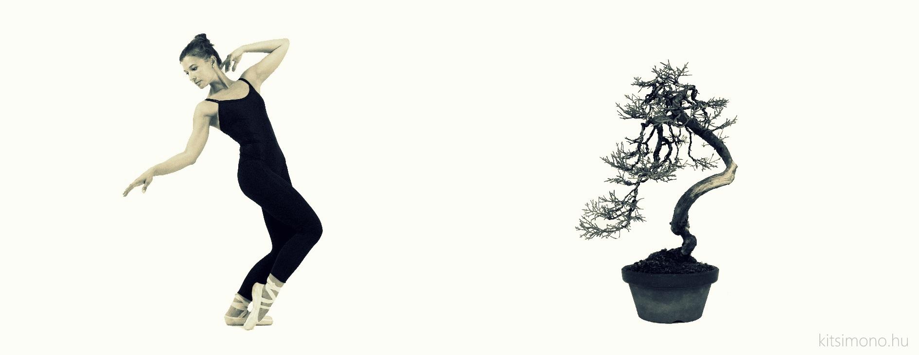 juniperus chinensis literati bunjin bonjin bonsai ballet dance kitsimono (7) másolata