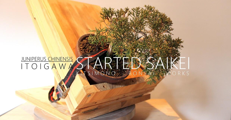 juniperus, itoigawa, shohin, boroka, bonsai, saikei, landscape, styling, restyling, kitsimono, bonsaj