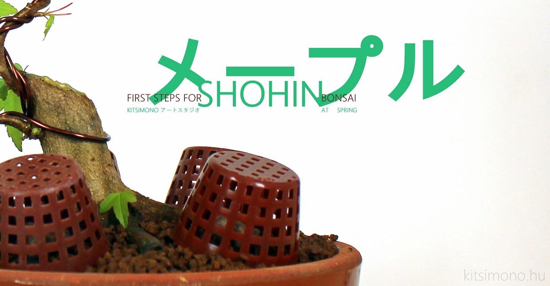 kaede shohin bonsai training kitsimono