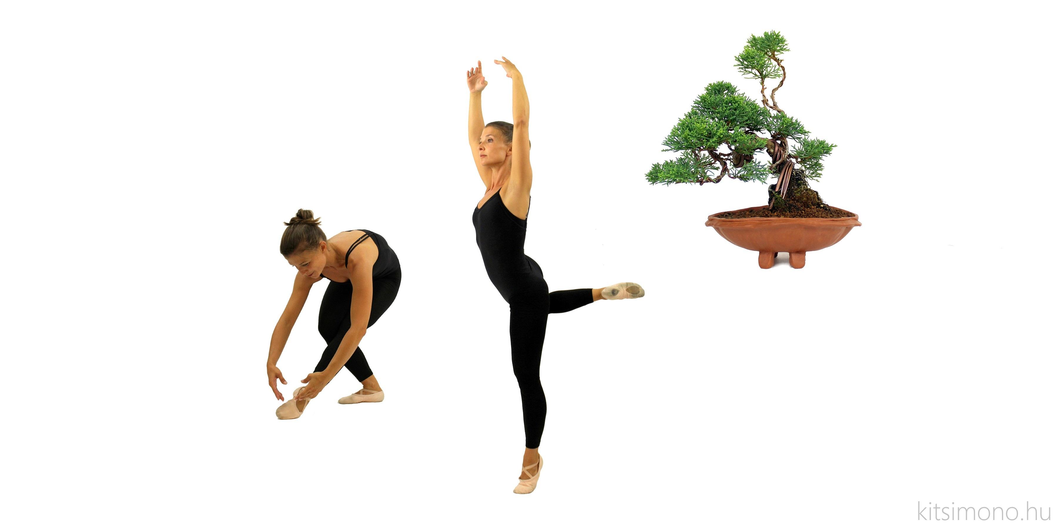 kishu juniperus chinensis shohin ballet kitsimono (5)