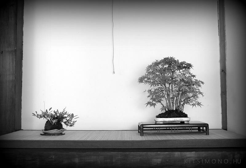 kitsimono bonsai and body art painting30
