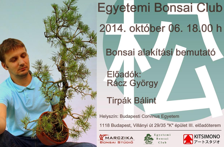 pinus sylvestris, erdei fenyo, bonsai, alakitasa, egyetemi bonsai club, kitsimono, demo
