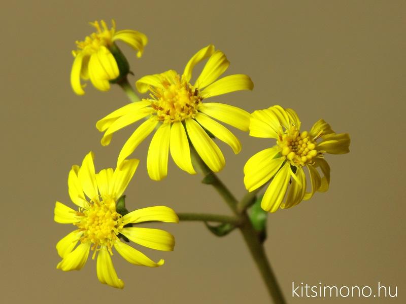 kusamono alapanyag kusamono shitakusa plant kitsimono