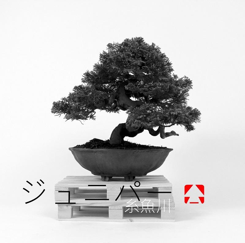 kitsimono modern bonsai and art urban bonsai 盆栽 草物 下草 (11)