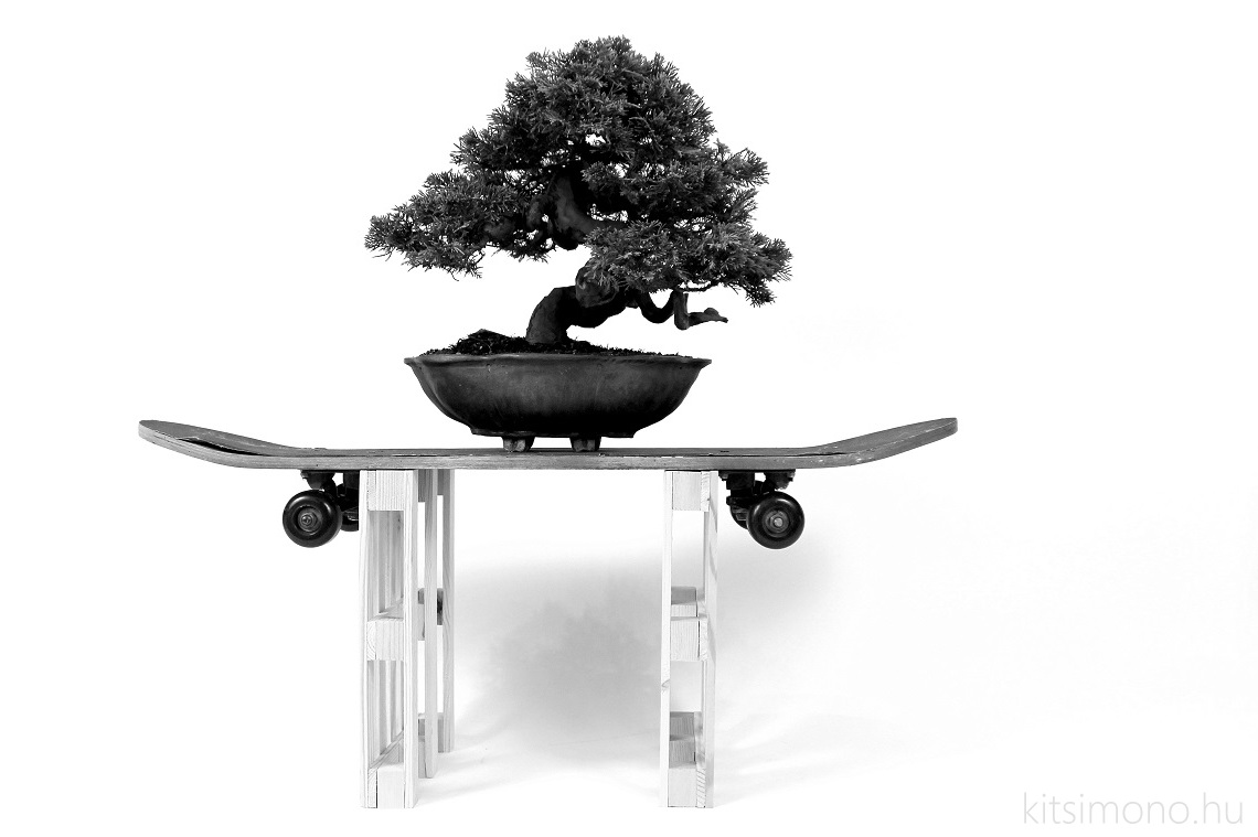 kitsimono modern bonsai art urban bonsai 盆栽 草物 下草