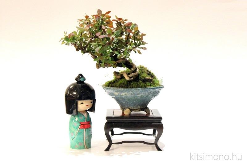 kokeshi bonsai kusamono kitsimono handmade (9)