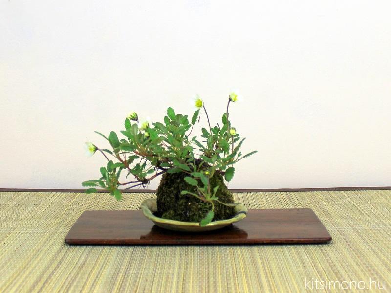 kusamono in flower kitsimono art  (3)