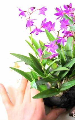 Kitsimono orchidea kokedama kusamono objekt bonsai display kihelyezésre kusamono tálon
