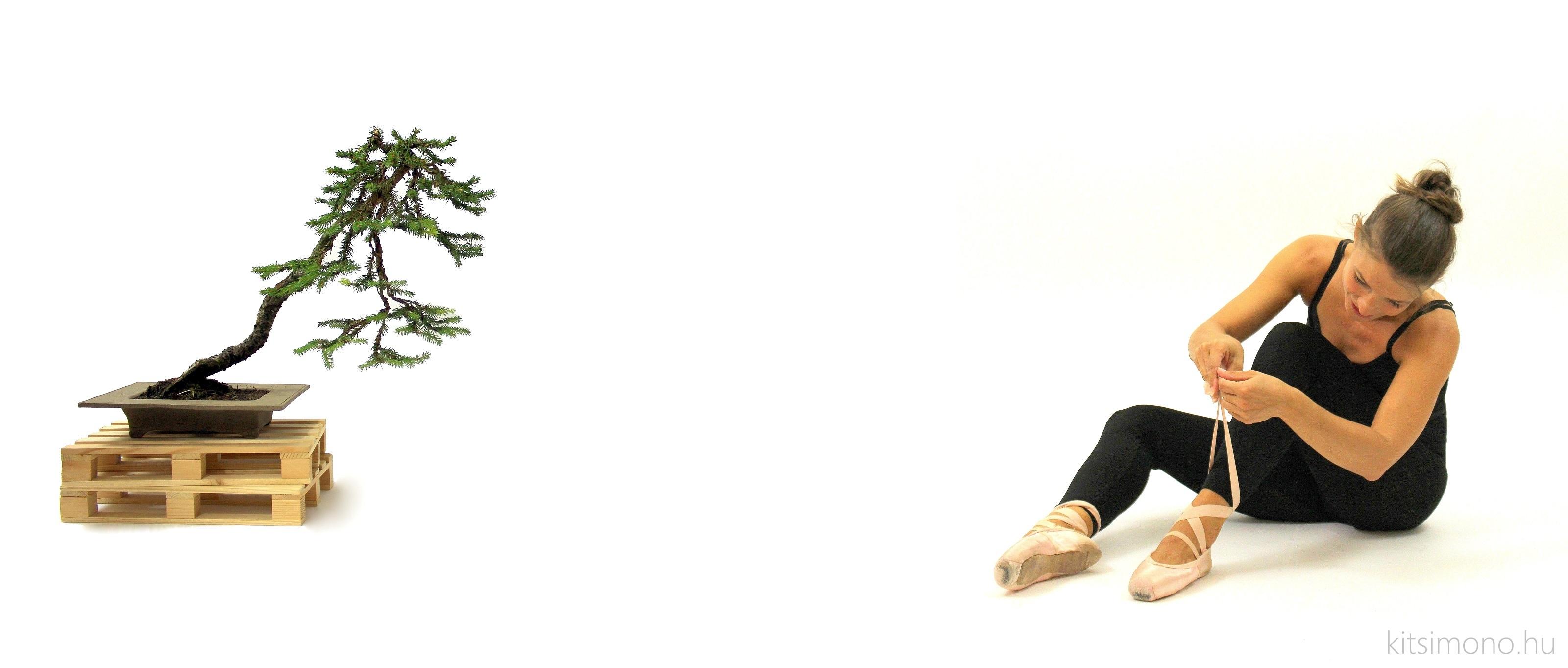 picea literati bunjin bonsai ballet kitsimono art experiments (10)
