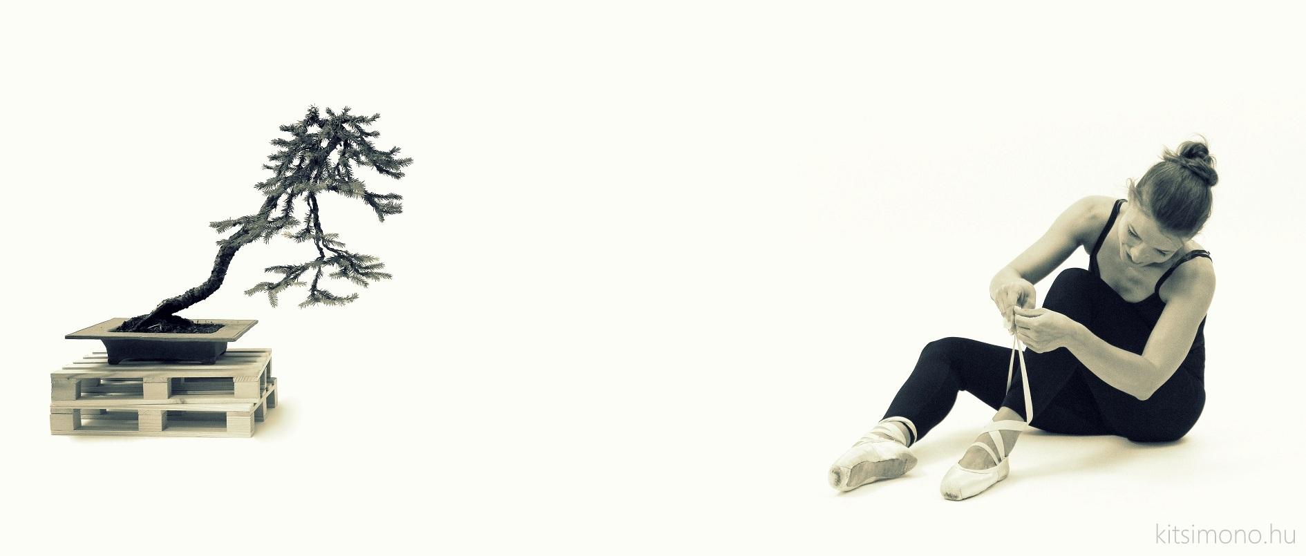picea literati bunjin bonsai ballet kitsimono art experiments (9)
