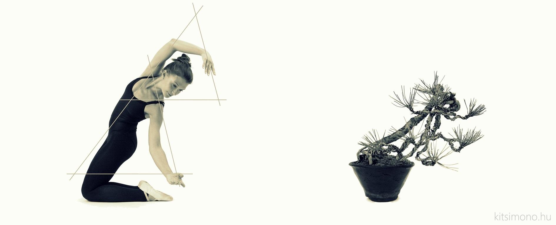 pinus bunjin black pine in jingasa pot and ballet dance (1)