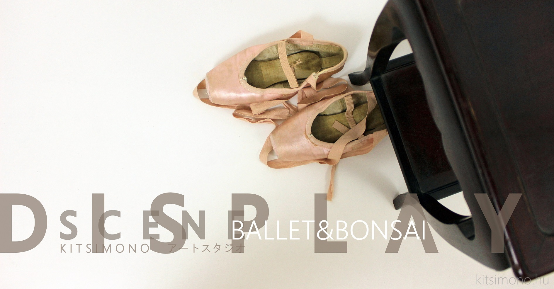 pinus nigra black pine matsu and literati bunjin bonsai ballet (19)