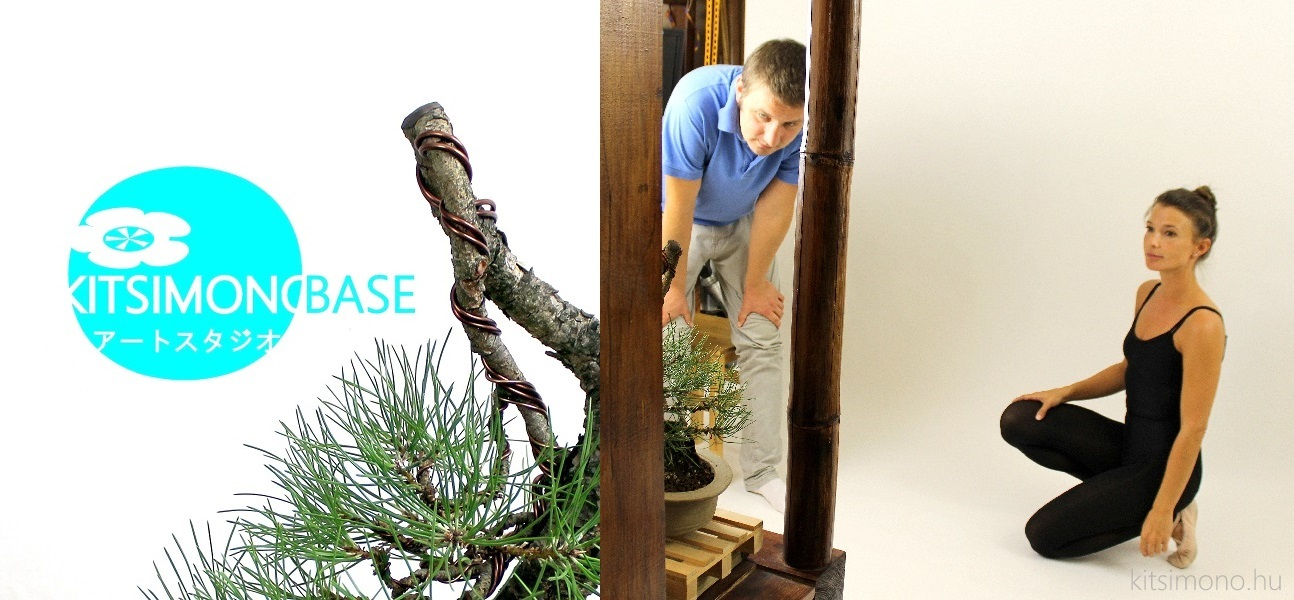 pinus nigra bonsai ballet in grey unglazed pot matsu (5)
