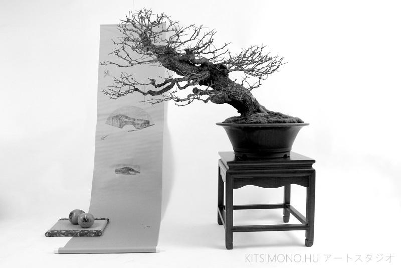 postmodern kazari with crataegus bonsai and kaki fruit on kakejiku (7)