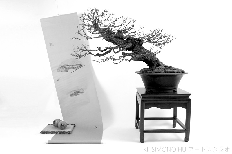 postmodern kazari with crataegus bonsai and kaki fruit on kakejiku (8)