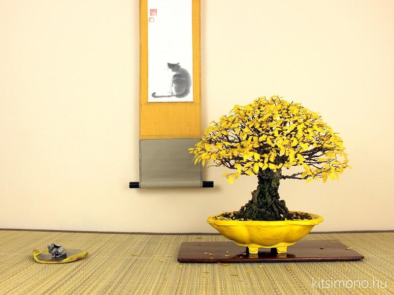 shohin bonsai display in autumn yellow bonsai pot kitsimono kakejiku tenpai (1)