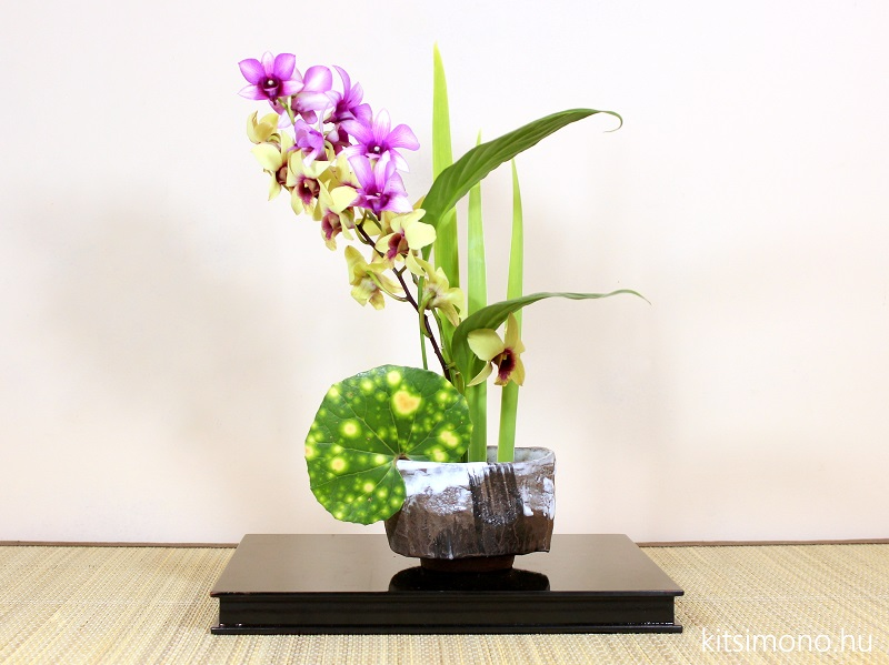 sogetsu orchidea ikebana dendrobium phalaenopsis kitsimono (5)