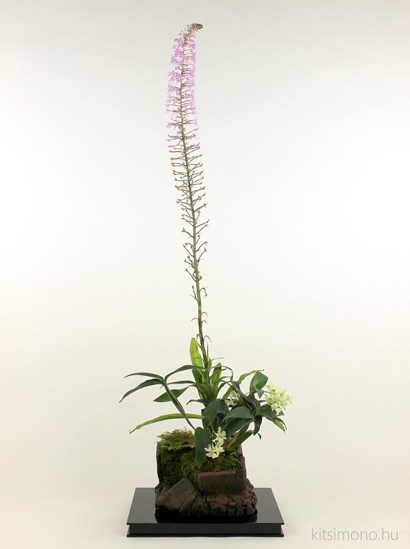stenoglottis longifolia and dendrobium tokunaga orchidea kusamono kitsimono (17)