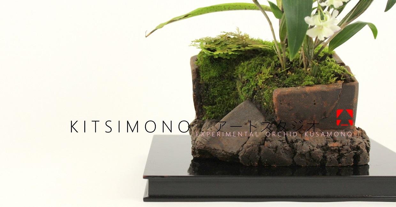 stenoglottis longifolia and dendrobium tokunaga orchidea kusamono kitsimono (19)