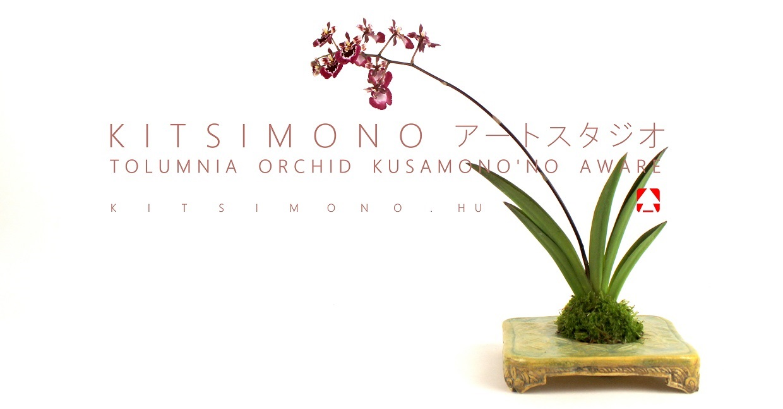 tolumnia orchidea kusamono and kakejiku kitsimono bonsai (9)