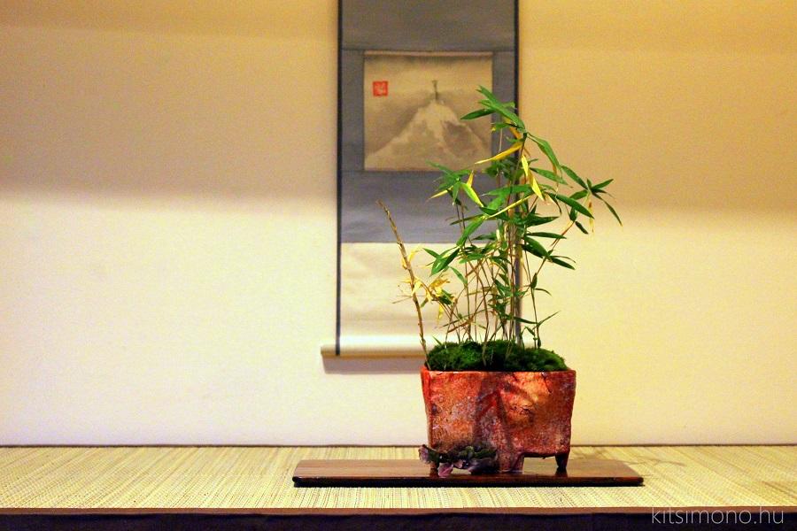 torpe, mini bambusz, bamboo, bambus, kusamono, accent plants, kitsimono, art