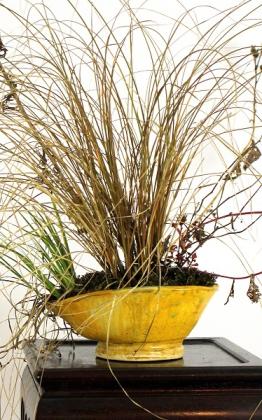 téli kusamono kakejikuval winter grass bonsai kitsimono