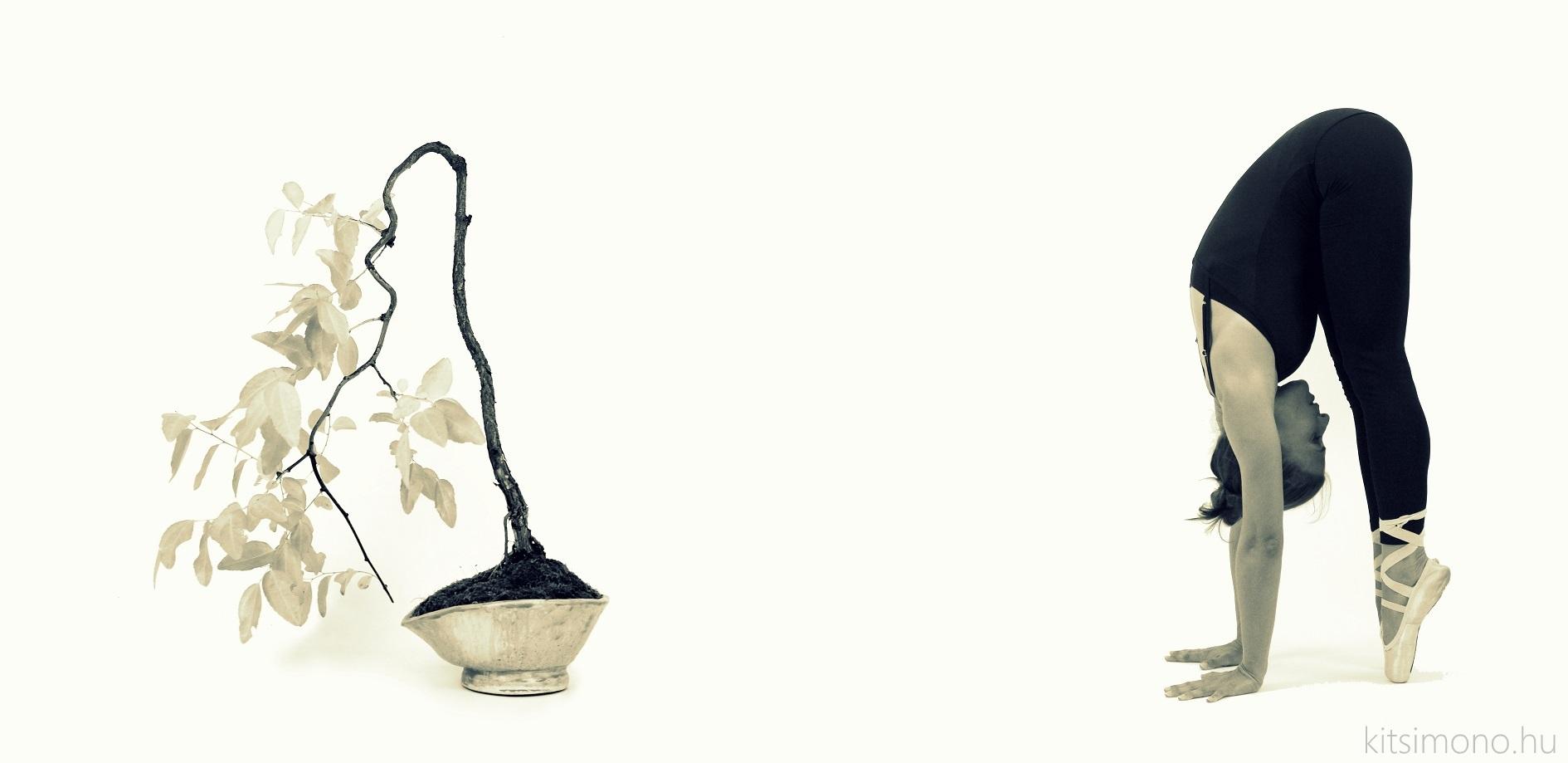 zizifus jujuba másolata másolata