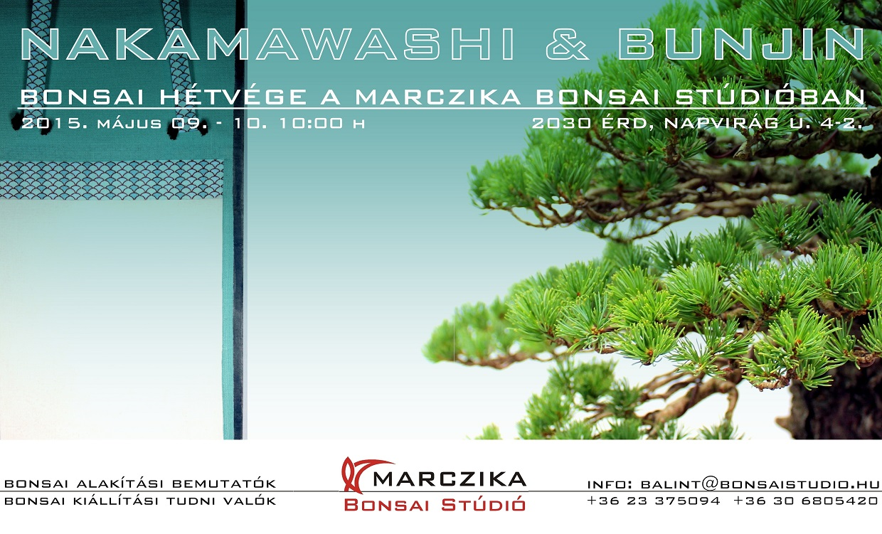 nakamawashi, bunjin, bonsai, bonsai alakitas, styling, kakejiku, bonsai display, bonsai displaying, kitsimono