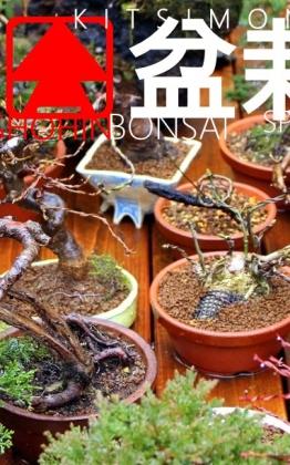 shohin bonsai kusamono kokedama és shitakusa a kertben tavasz és teendők kitsimono art workshop garden