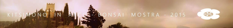 arco bonsai kitsimono bonsai and suiseki mostra and exhibition