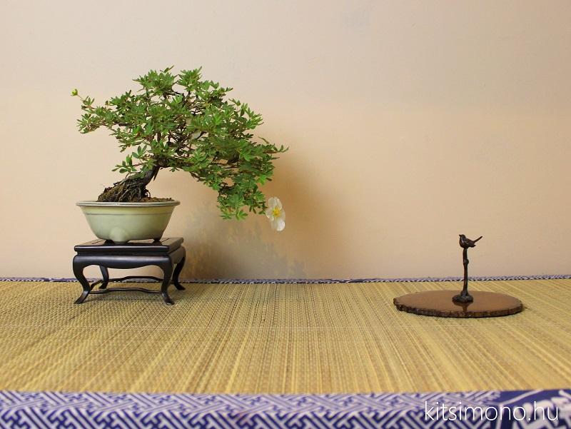 potentilla fruticosa shohin bonsai tal vasarlas rendeles kitsimono (2)