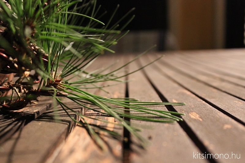 black pine shohin bonsai first steps styling kitsimono (11)